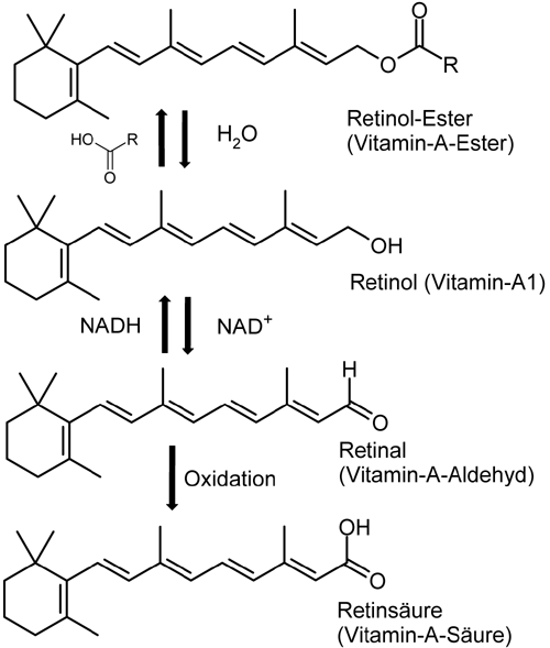 Verschiedenen Formen und Synthese von Vitamin A